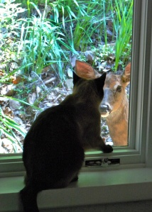 Our beloved Annie greets her friend, Doe